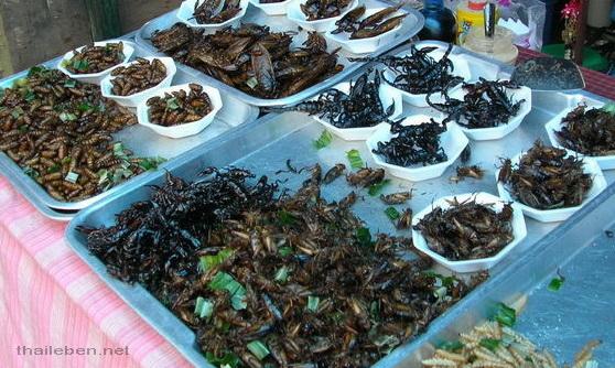 käfer fritiert