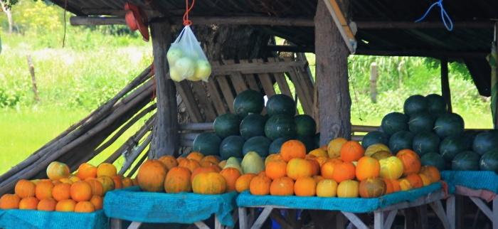 kürbis und melonen