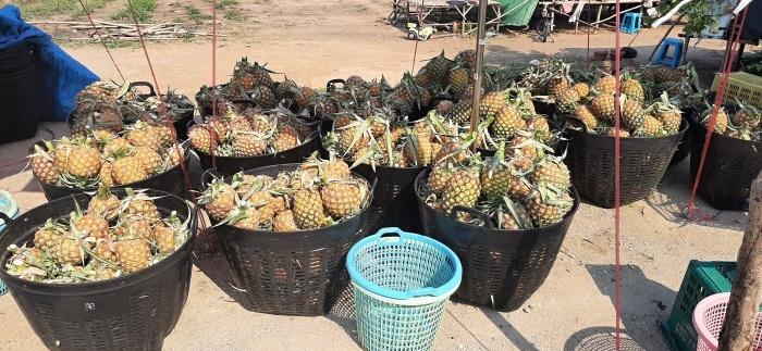 ananas auf dem Markt in körben