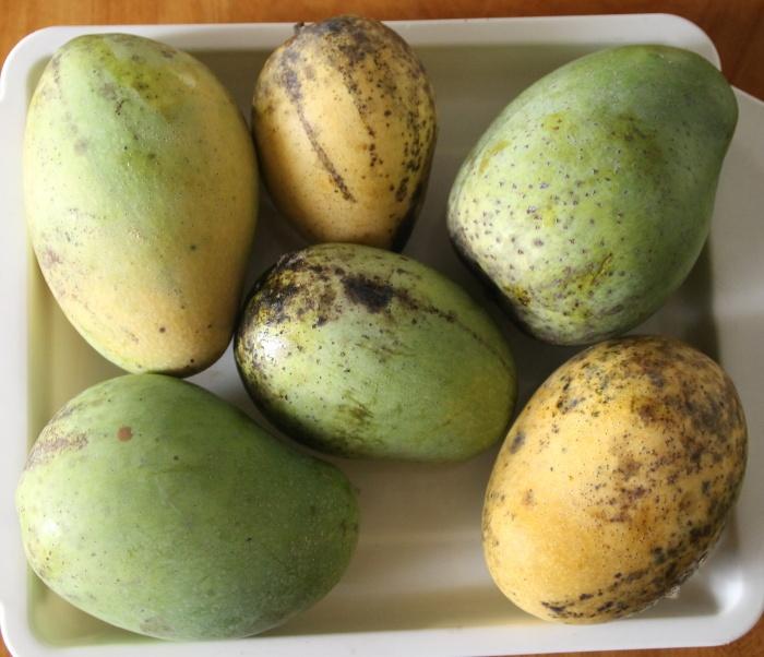 reife Mango