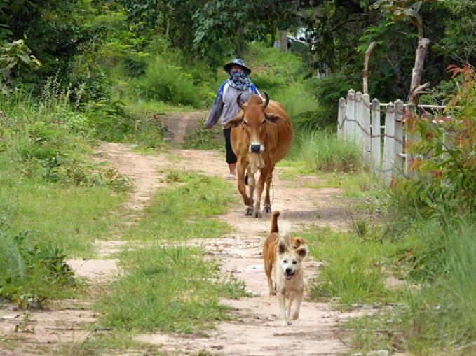 Frau mit Kuh und Hund