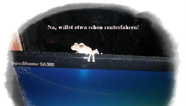 frosch auf bildschirm