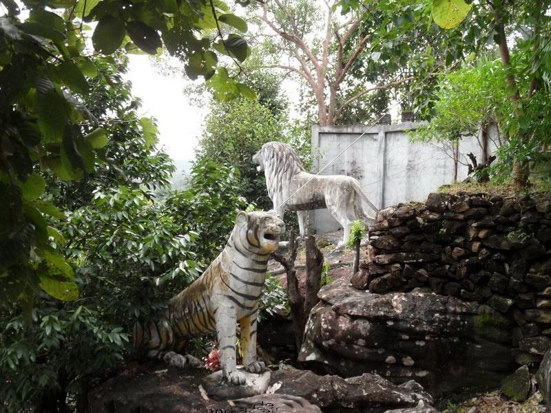 zwei tiger