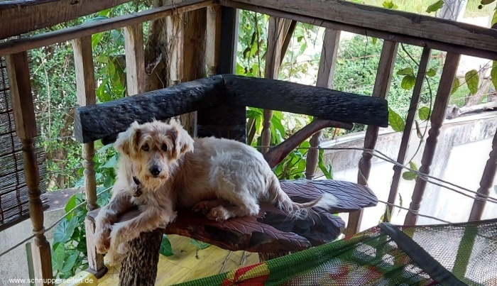 unser Hund schlumpi